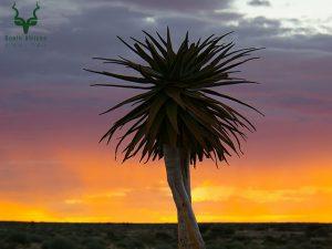 Upington Tourism   South African National Parks