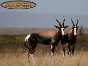 Tourism   Tours   Kalahari Tours